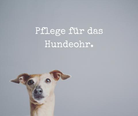 Ohrenpflege für den Hund – warum sie wichtig ist und wie es richtig geht