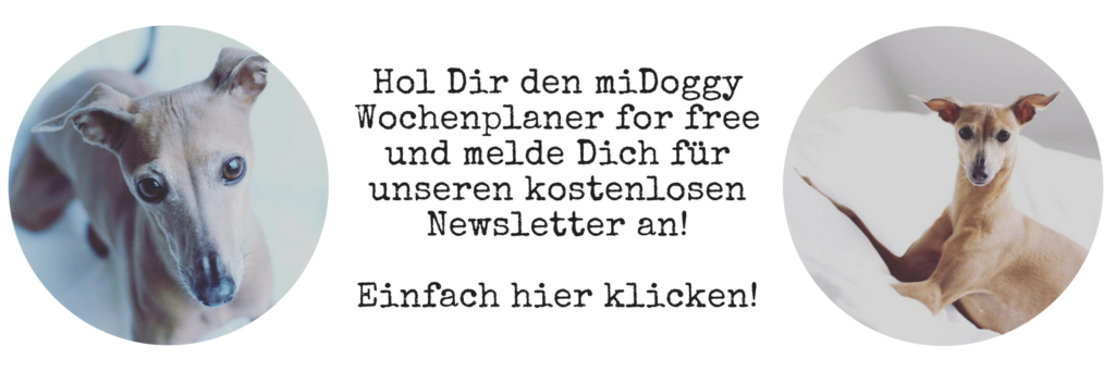 miDoggy Newsletter Beitrag
