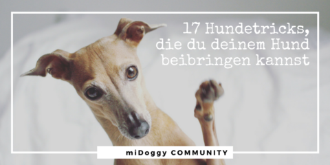 17 klasse Hundetricks, die Du Deinem Hund beibringen kannst