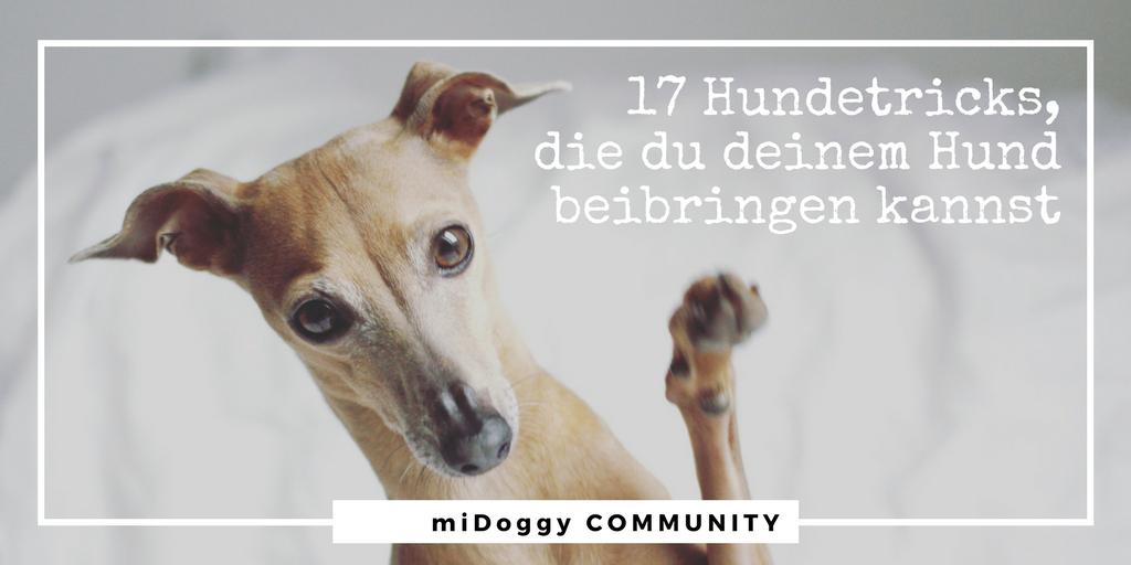 17 Hundetricks, die du deinem Hund beibringen kannst