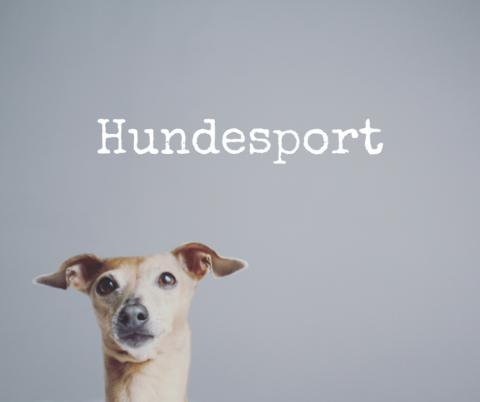 Welche Hundesportart passt zu dir und deinem Hund?