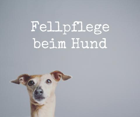 Fellpflege beim Hund – so geht's!