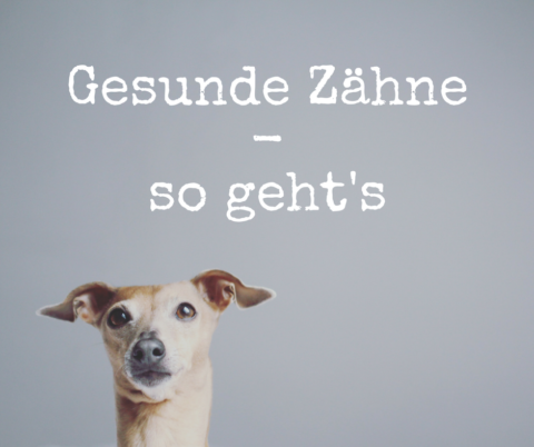 Pflege der Hundezähne – warum sie so wichtig ist und wie es richtig geht