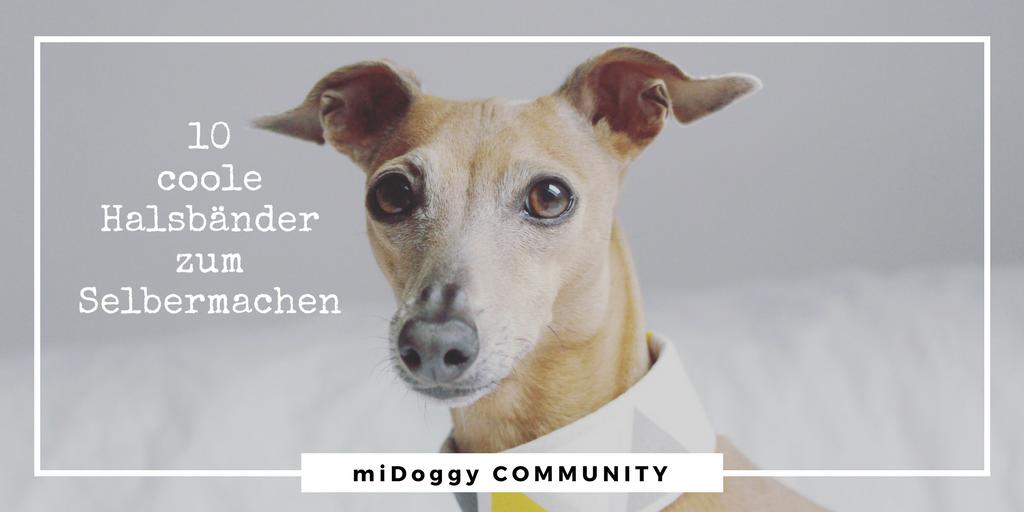 10 coole Hunde Halsbänder zum Selbermachen