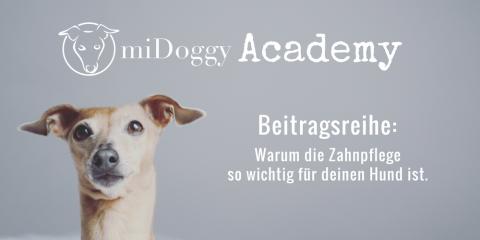 miDoggy Academy Beitragsreihe: Das passiert, wenn du deinem Hund die Zähne nicht pflegst.