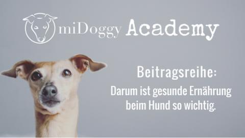 miDoggy Academy Beitragsreihe: Darum ist gesunde Ernährung beim Hund so wichtig.