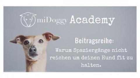 miDoggy Academy Beitragsreihe: Warum Spaziergänge nicht reichen um deinen Hund fit zu halten