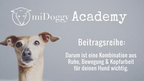miDoggy Academy Beitragsreihe: Darum ist eine Kombination aus Ruhe, Bewegung und Kopfarbeit für deinen Hund wichtig.