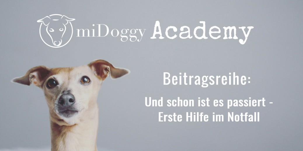 miDoggy-Academy-Beitragsreihe-Erste-Hilfe-im-Notfall
