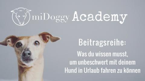 """miDoggy Academy Beitragsreihe: Was du zum Thema """"Urlaub mit Hund"""" unbedingt wissen solltest"""