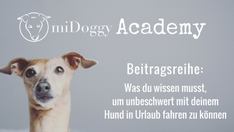miDoggy Academy Beitragsreihe: Kreativer Input: Meine Fotografie-Tools