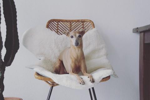 Ein nachhaltiges Leben mit Hund – so startest du! [Anzeige]