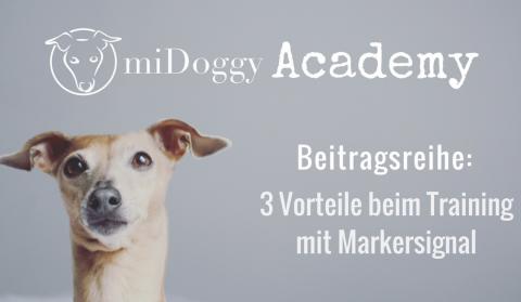 miDoggy Academy Beitragsreihe: 3 Vorteile beim Training mit Markersignal