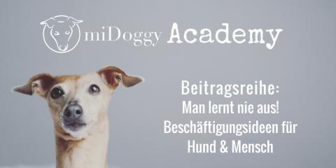 miDoggy Academy Beitragsreihe: Man lernt nie aus! – Beschäftigungsideen für Hund & Mensch