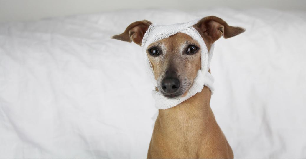 Körperliche Untersuchung des Hundes