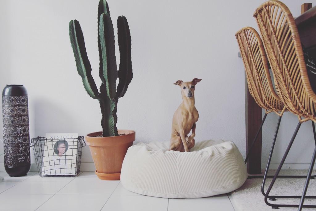 Hund entspannt allein daheim mit sen 5 Tipps geht s