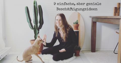 9 einfache DIY-Beschäftigungsideen für deinen Hund