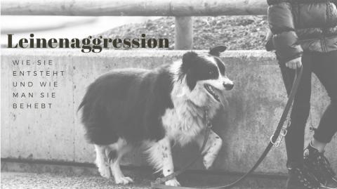 Leinenaggression – was du dagegen tun kannst