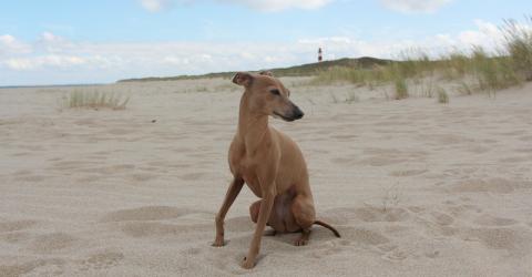 7 Gründe, warum du MIT deinem Hund Urlaub machen solltest