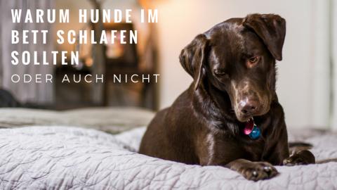 Warum dein Hund mit im Bett schlafen sollte oder auch nicht…