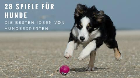 28 Hundespiele – die besten Ideen von Hundebloggern