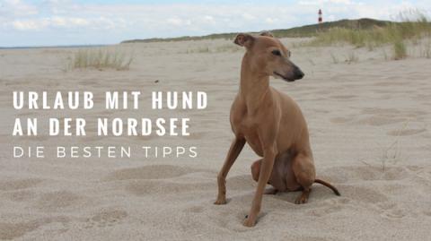 An der Nordsee mit Hund Urlaub machen – hier findest du die besten Tipps