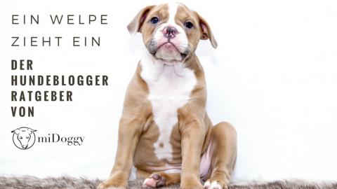 Der große Welpenratgeber von Hundebloggern