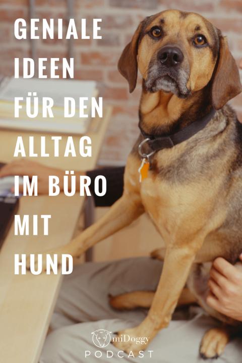 Der miDoggy Podcast || #10 mit Inga von pudelwohl,berlin
