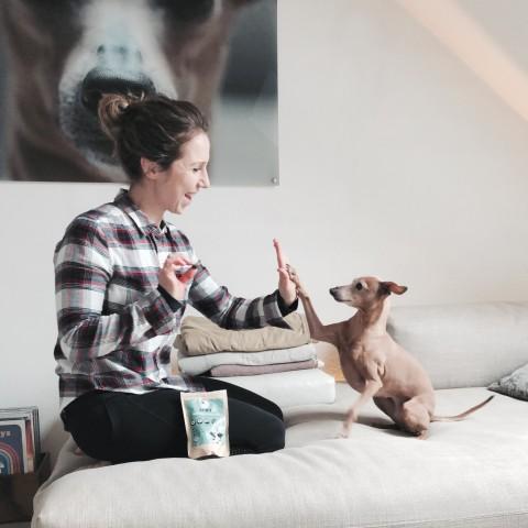 Sind Insekten die Zukunft des Hundefutters? [Anzeige]