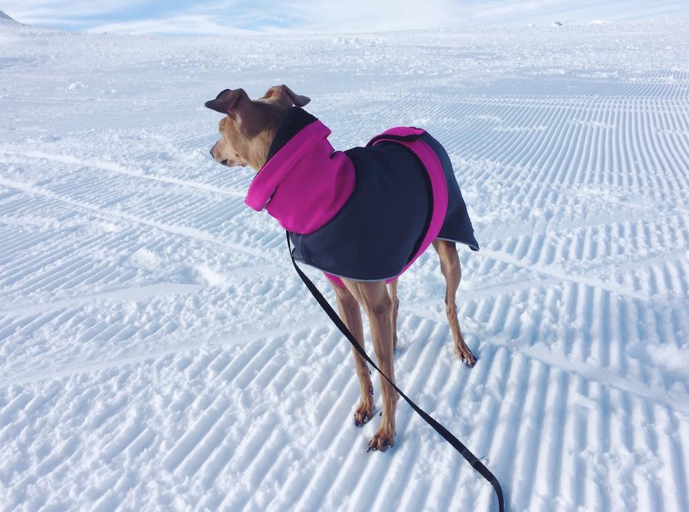 Mantel für Hunde