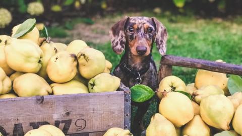 Der ökologische Pfotenaddruck deines Hundes – wie du ihn einfach reduzieren kannst